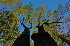 Seasonal Change (namhdyk) Tags: trees autumn autumnleaves fallcolors