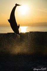 DSC20606_wm (rosev838) Tags: enosui enoshima sunset dolphin