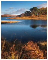 Loch Tulla, Scotland(3) (S.R.Murphy) Tags: glencoe landscape lochtulla oct2019 scotland water tree trees autumn autumncolours fall fallcolor color lee06ndgrad leepolariser fujifilmxt2 fujifilmxf1680mm nature afternoon blackmount