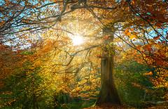 Autumn Collection - 3 - sunrays (Dhina A) Tags: sony a7rii ilce7rm2 a7r2 a7r fe 24105mm f4 sonyfe24105mmf4 zoom lens bokeh sharp sel24105g autumn collection 3 colors park sunrays