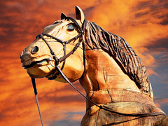WARHORSE. WE WILL REMEMBER THEM. (tommypatto : ~ IMAGINE.) Tags: remembrance ww1 ww2