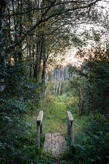 Between (Mattias Hedberg) Tags: fall autumn bridge forest grass landscape leaves nature path road sweden tree