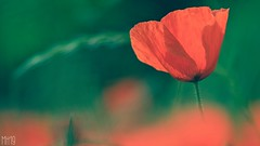 Lest we forget... (spideysenses77) Tags: bravery helpforheroes thankyou service veterans navy army raf armedforces heroes remembrance remember