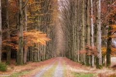 09112019-DSC_0051 (vidjanma) Tags: petitestailles allée automne hêtres