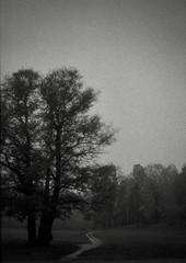 Walk the path of sorrow (fromfarbeyond) Tags: pentax spotmatic ilford 3200 tree rain bw analog grain path ilforddelta3200 satyricon hagaparken