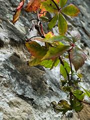 (paulineguetvitte1) Tags: arbre tree arbres abre detail détails détail vert green feuilles feuille abstraction abstract