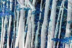Sliders Sunday (Daryll90ca) Tags: sliderssunday slider hss forest
