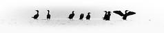 Just chatting — birds (Gael Varoquaux) Tags: birds social seabirds silhouette contrast