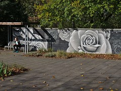 Autumn rose (diarnst) Tags: herbst blätter mauer graffiti bank rose mädchen autumn leaves wall bench girl