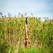 1 1 Beaverbrook trails-4