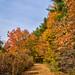 1 1 Beaverbrook trails
