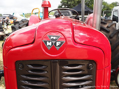 Massey fergusson tractor-front (Julie V. Simpson Photographer) Tags: green trees leaves nature shadows naturalworld instadaily instagram instanature naturephotography naturelovers natureza natureperfection newzealand waimatenorth apshow roses horses tractor