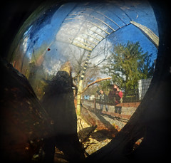 Corvid Sunday Selfie (MTSOfan) Tags: mirror convex jan janice john mtsofan selfportrait hss selfiesunday