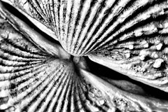 A look in the mirror is a look into the void. (Mr Winegettr) Tags: macromondays reflection shell blackandwhite mirror