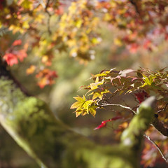(Andrew :-)) Tags: mediumformat bronicasqa kodakportra400 120 6x6 winkwortharboretum autumn