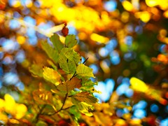 Autumn Bokeh   10. November 2019  Tarbek - Schleswig-Holstein - Germany (torstenbehrens) Tags: autumn bokeh   10 november 2019  tarbek schleswigholstein germany olympus em10 m45mm f18