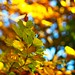 Autumn Bokeh | 10. November 2019 |Tarbek - Schleswig-Holstein - Germany