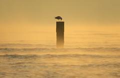 IMG_0057x (gzammarchi) Tags: italia paesaggio natura mare ravenna lidodidante alba riflesso animale uccello palo monocrome