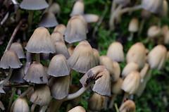 City of Mushrooms