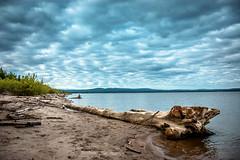 Lesser Slave Lake Drift Log (Bracus Triticum) Tags: lesser slave lake drift log アルバータ州 alberta canada カナダ 8月 八月 葉月 hachigatsu hazuki leafmonth 2019 reiwa summer august