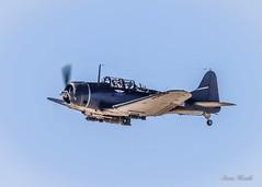Douglas SBD-5 Dauntless (rsheath76) Tags: caf bomber wwii douglassbd5dauntless aircraft dallas