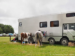 Two horses and their horse box (Julie V. Simpson Photographer) Tags: green trees leaves nature shadows naturalworld instadaily instagram instanature naturephotography naturelovers natureza natureperfection newzealand waimatenorth apshow roses horses tractor