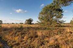 Speulderveld (paulbunt60) Tags: landscape heide landschap speulderveld heath heathland heideveld