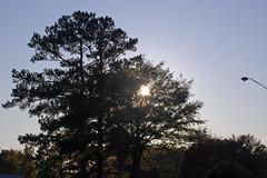 Sun Setting Behind The Trees. (dccradio) Tags: lumberton nc northcarolina robesoncounty outdoor outdoors outside nikon d40 dslr autumn fall weekend saturday saturdayafternoon afternoon goodafternoon park citypark lutherbrittpark nature natural tree trees branch branches treebranch treebranches treelimb treelimbs foliage greenery sky bluesky streetlight lightpole lamppost sun sunlight