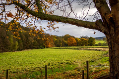 SJ2_3033 - Autumn in the Park (SWJuk) Tags: burnley england unitedkingdom swjuk uk gb britain lancashire home towneley towneleypark meadows trees fence foliage leaves 2019 nov2019 autumn autumnal autumncolours nikon d7200 nikond7200 nikkor1755mmf28 rawnef lightroomclassiccc landscape countryside sky clouds light sunlight