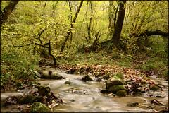 Ruisseau (Frank PRAT) Tags: frankpratphotographie eau water
