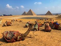 Taking a break (elraphabr) Tags: pyramids cairo khufu khafre menkaure cheops desert camels