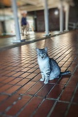 2019-11-11_12-05-57 (jumppoint5) Tags: cat cats urban bokeh blur stare glare