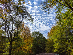 fall + clouds (ekelly80) Tags: michigan grandhaven october2019 fall clouds sky puffy fallfoliage fallcolors trees leaves view colors
