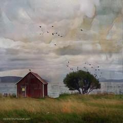 By the sea (Kerstin Frank art) Tags: cottage tree lonely sky texture distressedtexture kerstinfrankart birds distressedfxapp ipad sea