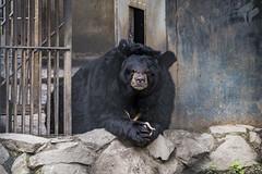 Khabarovsk Zoo (一 B_A_C 一) Tags: europe sony a7 a73 俄羅斯 歐洲 伯力 哈巴羅夫斯克 a7iii a7m3 street travel zoo taiwan streetphoto 台灣 streetshot 動物園 外拍 街拍 旅拍