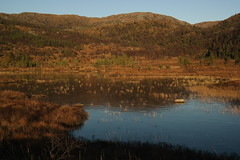 SAM_3152 (magneroed) Tags: autumn water grass landscape scenery ice fitjar norway trees sun brown green blue