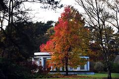 Brookwood 7 November 2019 010 (paul_appleyard) Tags: brookwood cemetery surrey november 2019