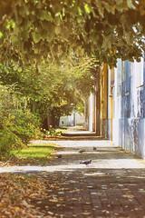 Ulica golubova