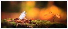 Autumn (1 of 1)-7 (ianmiddleton1) Tags: autumn autumnal fall glasgow