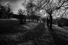 Landscape Trees in Fall (Deepmike70) Tags: fall herbst landscape landschaft autumn sunset bw blackandwhite