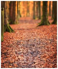 Autumn (1 of 1)-2 (ianmiddleton1) Tags: autumn autumnal fall glasgow