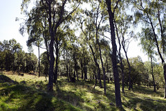 Photo of glen feardar trees