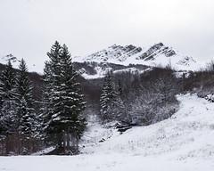 First snowfall of the season - 1 (Nobusuma) Tags: nikon nikond610 nikkor50mmf18g digital firstsnowfall snow trees italia toscana appenninotoscoemiliano valdiluce dentidellavecchia hiking exploring ニコン 初雪 雪 イタリア アペニン山脈 山