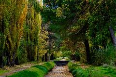 LA FIESTA DEL OTOÑO (marthinotf) Tags: luzdeotoño canal arboles verdes colresdeotoño hojassecas cauce ocres cauceseco hojascaidas viento