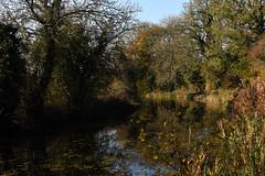 Basingstoke Canal Greywell-North Warnborough-Odiham 10 November 2019 017 (paul_appleyard) Tags: basingstoke canal north warnborough water waterway still calm reflections peaceful november 2019