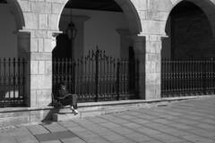 Enjoying the autumn sun (lebre.jaime) Tags: portugal beira guarda streetphotography people analogic film135 bw blackwhite nb noiretblanc pb pretobranco ilford fp4 iso125 leicam3 summicron2050dr epson v600 affinity affinityphoto