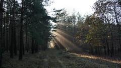 The way to the light / Der Weg zum Licht (r.stopable1) Tags: sun forest trees sunrays fall path way light licht weg pfad herbst sonnenstrahlen bäume sonne natur nature mystisch mystical
