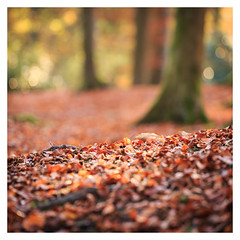 Autumn (1 of 1)-6 (ianmiddleton1) Tags: autumn autumnal fall glasgow