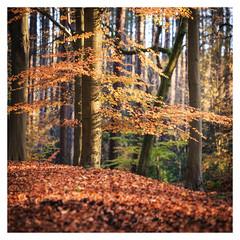 Autumn (1 of 1)-5 (ianmiddleton1) Tags: autumn autumnal fall glasgow
