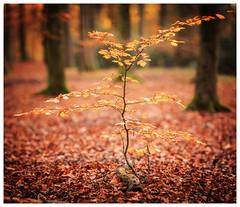 Autumn (1 of 1)-4 (ianmiddleton1) Tags: autumn autumnal fall glasgow